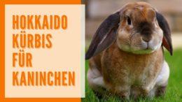 Dürfen Kaninchen Hokkaido Kürbis fressen?